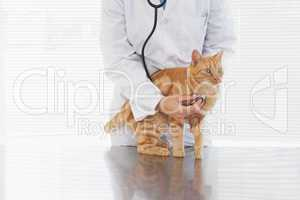Vet checking a cats heartbeat