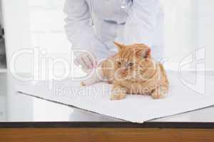 Vet bandaging a cats leg