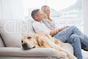 Dog lying on the couch with the couple sitting behind