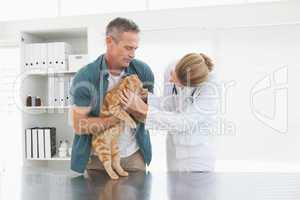 Owner holding his cat as vet examines it