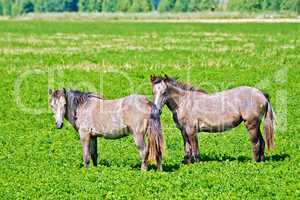 Horse small brown