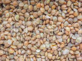 Lentils food