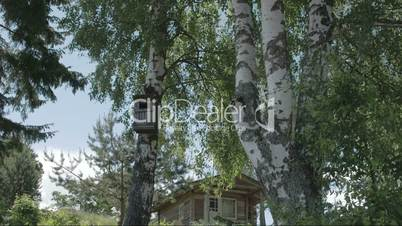 Trees around the small house in Kasmu Estonia FS700 4K RAW Odyssey 7Q