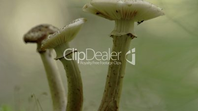 Closer look of the stalk of the white mushroom with flies FS700 Odyssey 7Q 4K