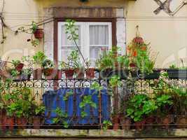 Blumenbalkon in Lissabon