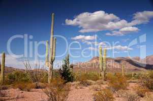 Organ Pipe Cactus National Monument, Arizona, USA