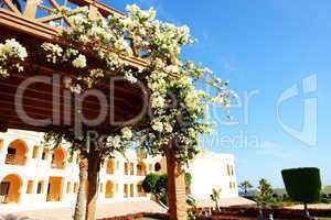 The flowers decoration at luxury hotel, Sharm el Sheikh, Egypt