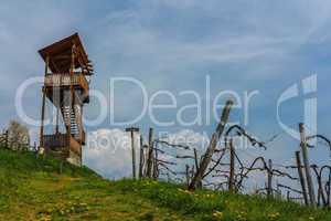 Vineyard Scenery