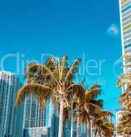 Palms and modern skyline of Miami on a beautiful sunny day