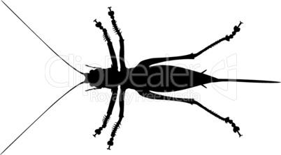 Grashüpfer