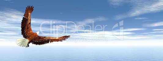 Eagle flying - 3D render