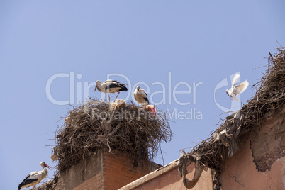 Storks nesting on a rooftop in Marrakesch