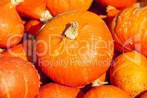 red roter Hokkaido cucurbita pumpkin pumpkins from autumn harves