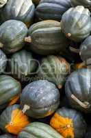 Mesa Queen Eichelkürbis Winterhorn cucurbita pumpkin pumpkins f