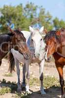group of horses outside horse ranch in summer