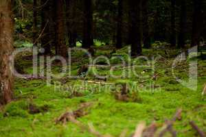 nature forest autumn with green moss and trees