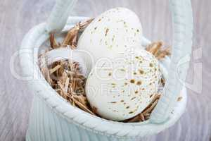 Three natural blue Easter eggs in a basket