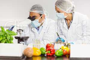 Food scientists using the microscope for research