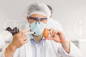 Food scientist injecting an egg