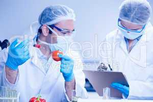 Food scientist injecting a tomato