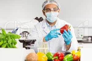 Food scientist examining a pepper