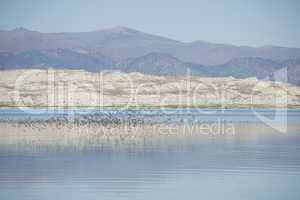 Birds over Mono Lake 3