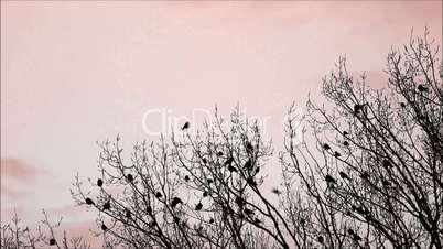 Krähen treffen sich auf einem Baum