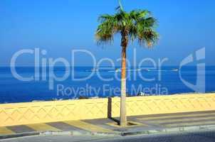 Palme an der Corniche in Dubai Vereinigte Arabische Emirate the Palm