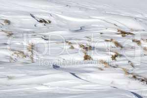 Closeup of snowdrift and grass