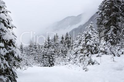 Foggy mountain landscape in winter