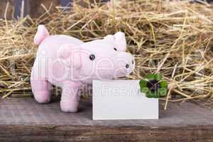 Lucky pig