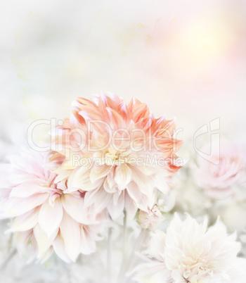 Soft Focus Floral Background