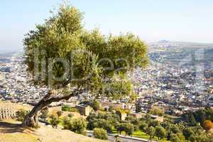 from high in the village morocco tree