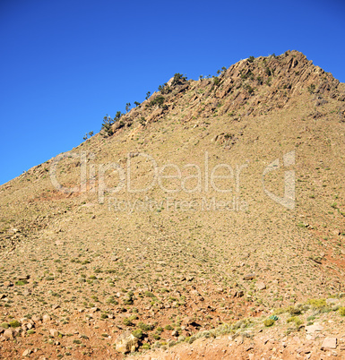 the    dades valley in atlas moroco africa ground tree  and nobo