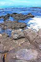 the zanzibar beach  seaweed in indian ocean