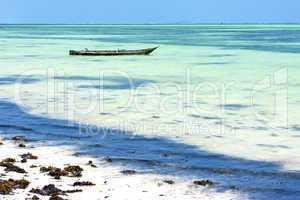 beach   in zanzibar seaweed    ocean tanzania