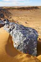 bush old  in  the desert of morocco sahara and rock  stone sky