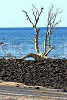 dead tree andilana beach seaweed in indian ocean