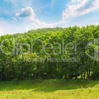 forest ,green meadow and blue sky