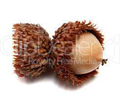 Acorn isolated on white background