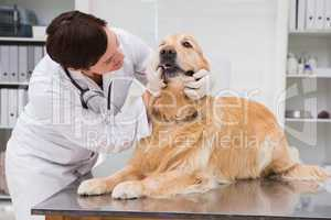 Veterinarian examining teeth of a cute dog