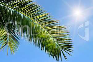 leaves of tropical palm trees and blue sky