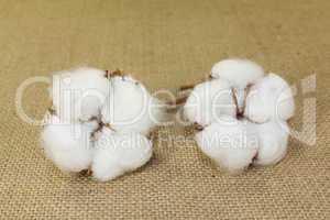 weiße Baumwolle auf Jute