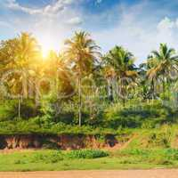 palm grove and the sunrise
