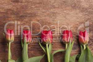 Reihe von Tulpen auf dunklem Holz
