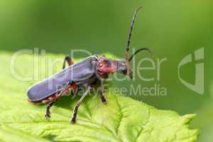 Insect portrait