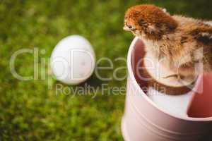 Stuffed chick in pink bucket