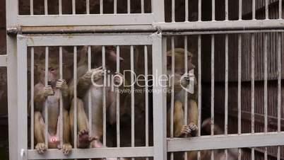 Monkeys in Scientific Apery