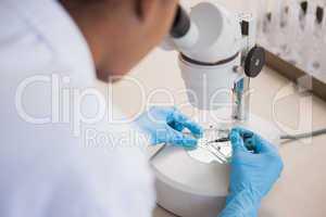 Scientist examining petri dish under microscope