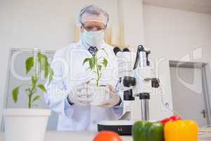 Food scientist looking at green plant